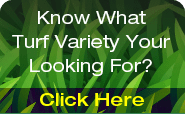 Hi Quality Turf varieties banner