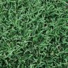 CONQUEST COUCH TURF SUPPLIER