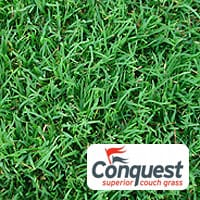 Conquest-Couch