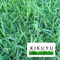 Kikuyu-Lawn