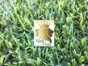 Kings-Pride-Soft-Leaf-Buffalo