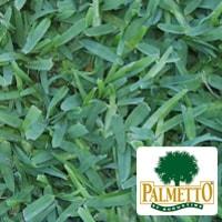 Palmetto-Buffalo