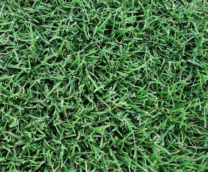 SANTA-ANA COUCH TURF SUPPLIER