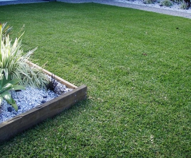Kings Pride Grass