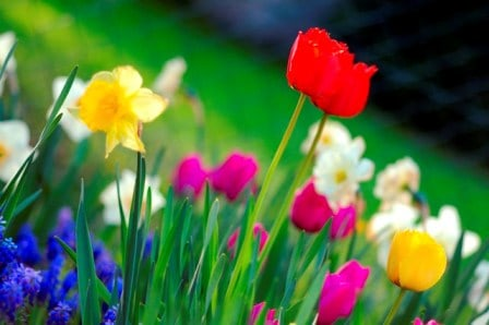 Colorful_spring_garden_lo