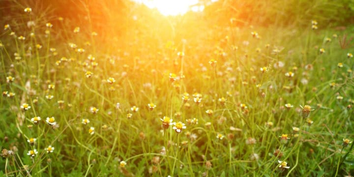 Grass in Summer