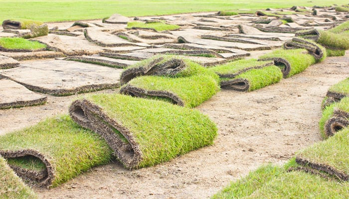 Rolls of lawn turf laid out on a home yard