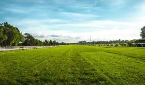 Person standing on Empire Zoysia grass