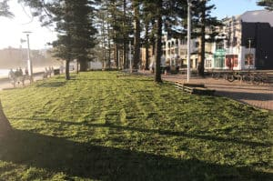Council Turf Laying beside beach