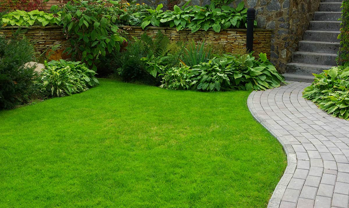 top turf supplier in sydney